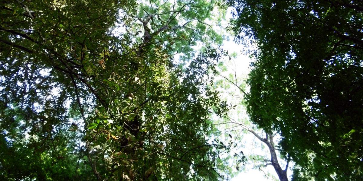 «Un parc-ressource» Parc privé – Villers-Allerand (51)