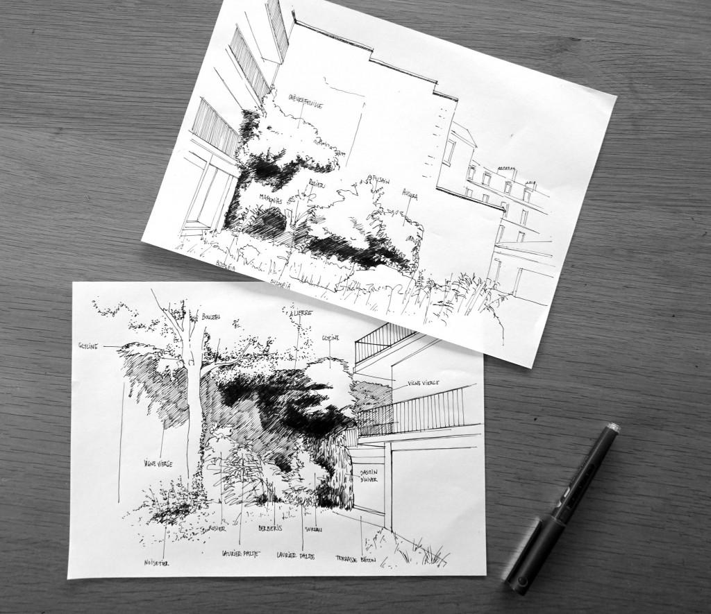 R02-VIGN-dessin -Racine-Reims-atelierdesaugures